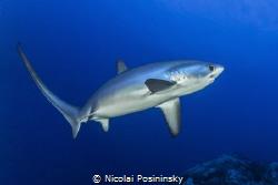 Delusions encounter with a drescher shark Taken in Octob... by Nicolai Posininsky