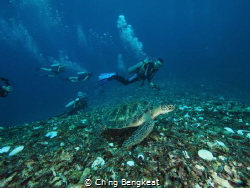 Swimming with sea turtle. by Ch'ng Bengkeat