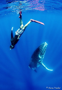 Having fun with a Humpback Whale by Norm Vexler