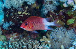 Just a single fish... Coral view by Eduard Bello