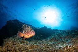 Grouper of El Hierro . by Claude Lespagne