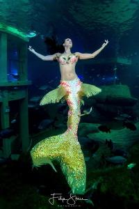 Mermaid Céline @ TODI in Belgium by Filip Staes