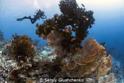 Coral Kingdom. by Sergiy Glushchenko