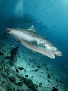 small diver by Marc Van Den Broeck