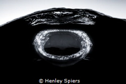 Daddy Shark by Henley Spiers