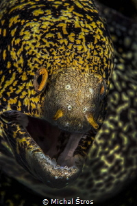 Snowflake moray eel by Michal Štros