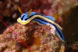 Good old Nudi..... Bali by Brad Cox