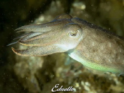 Catfish young by Eduard Bello