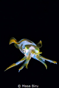 Squid by Masa Biru