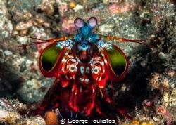 Mantis Samurai!!! by George Touliatos
