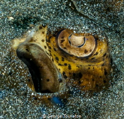 Eye in the Sand!!! by George Touliatos