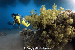 Yellow diver in the Red Sea. by Sergiy Glushchenko