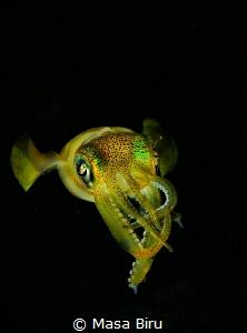Castlefish by Masa Biru