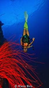 Red coral by Masa Biru