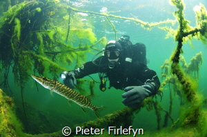 Diver with pike in the pond of Ekeren/Belgium by Pieter Firlefyn