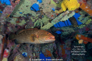 28mm - Experimenting with a different lens for underwater... by Susannah H. Snowden-Smith