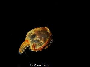 Baby crab ? Not sure by Masa Biru