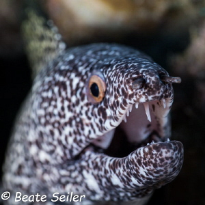 Moray hurray ! by Beate Seiler