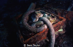 Japanese WWII gas masks, 'Helmet Wreck Malakaal harbour, ... by Sam Taylor