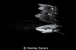 Blue Shark Reflection by Henley Spiers