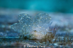 Look by Xiaomeng Pang
