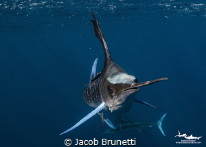 The Hunter by Jacob Brunetti