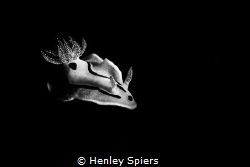 Nudi in Mono by Henley Spiers