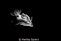 Nudi in Mono by Henley Spiers
