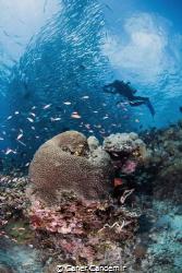 Underwater Photographer by Caner Candemir
