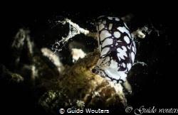 RACING NUDIBRANCH / EENTJE OP  7METER GENOMEN IN SAFAGA /... by Guido Wouters