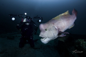 Diver taking picture for Asian sheepshead wrasse by Jinggong Zhang