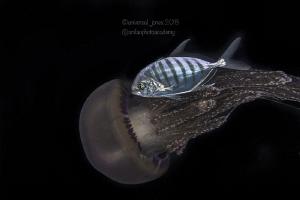 Jack and Jelly Fish... by Wayne Jones