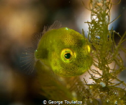 Green Speck!!! by George Touliatos