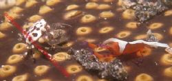 the heavy weights of the ocean shaping up. This shrimp an... by Brad Cox