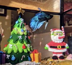 Swimmin' around the Christmas tree :) by Steve Dolan