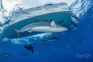 Shark with Boat and Diver, Garden of the Queen Cuba by Alejandro Topete