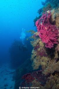 coloured gorgonians , Ustica Island by Antonio Venturelli