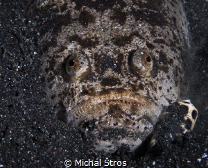 Stargazer and cone snail - a deadly combination by Michal Štros