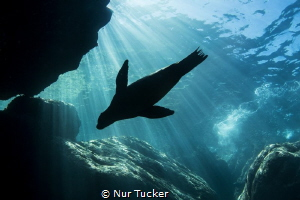 A sea lion is soaking up the sun in LaPaz, Mexico by Nur Tucker