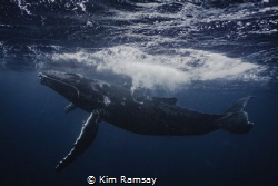 Joy.