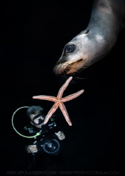 Sea Lion Star by Nick Polanszky