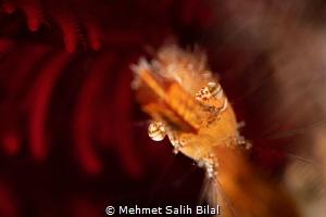 Donald duck shrimp. by Mehmet Salih Bilal