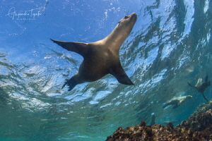 Sea Lions in the Sky, Bahia Magdalena  Mexico by Alejandro Topete