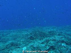Over the reef by Hansruedi Wuersten