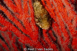 The hide away