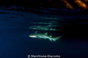 Nurse shark in the sunset Fish eye with Super dome Niko... by Marchione Giacomo