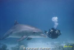 Dive with the Dolphin by Hansruedi Wuersten