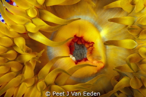 Sunrise Sunset