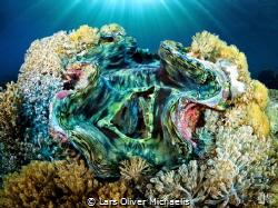 Giant Clam (tridacna derasa) by Lars Oliver Michaelis