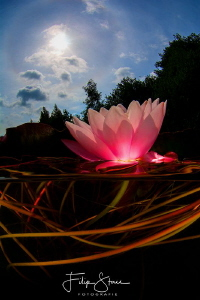 """Let there be light"", Waterlily, Turnhout, Belgium. by Filip Staes"